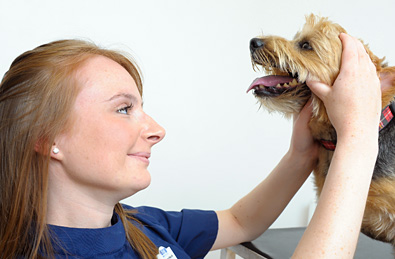 Canine Dental Care & Disease