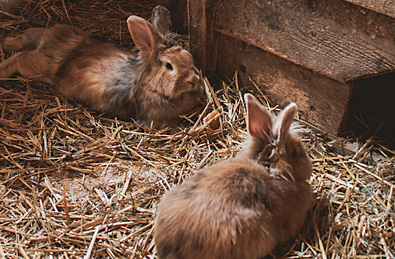 Rabbit Husbandry & Socialisation