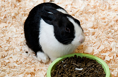Rabbit Nutrition