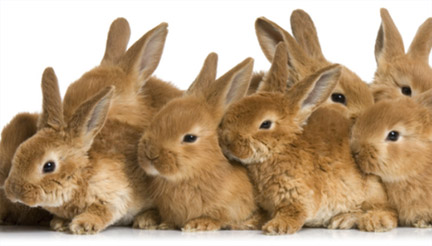New risks for rabbits - new vaccinations for our bunny clients
