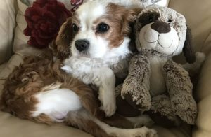 dog-casper-with-his-toy