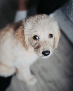 608-vets-puppy